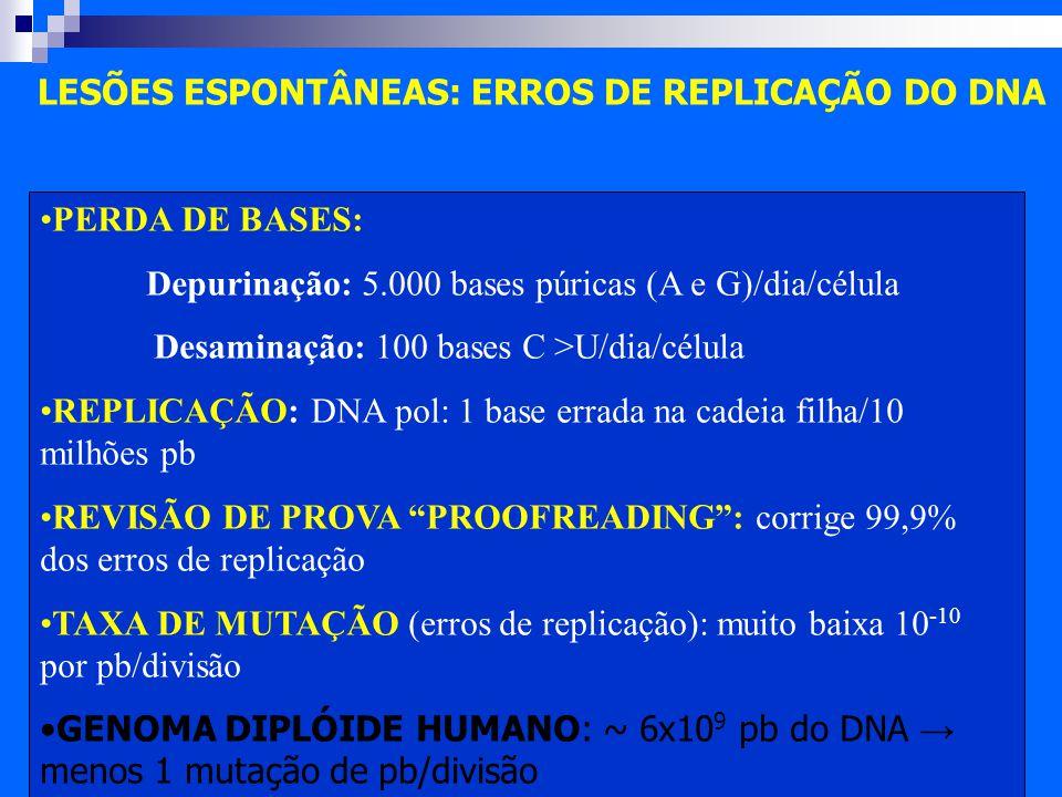 Prova de Biologia Molecular e Gentica 1 - Questes e
