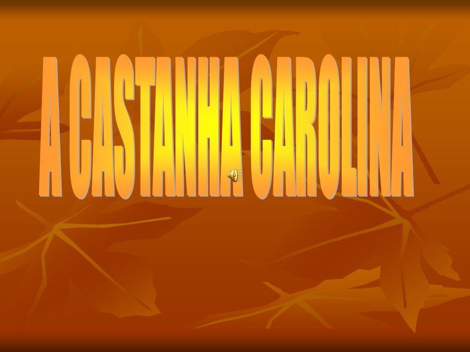 A CASTANHA CAROLINA