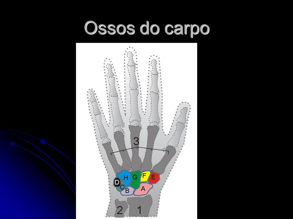 Ossos do carpo