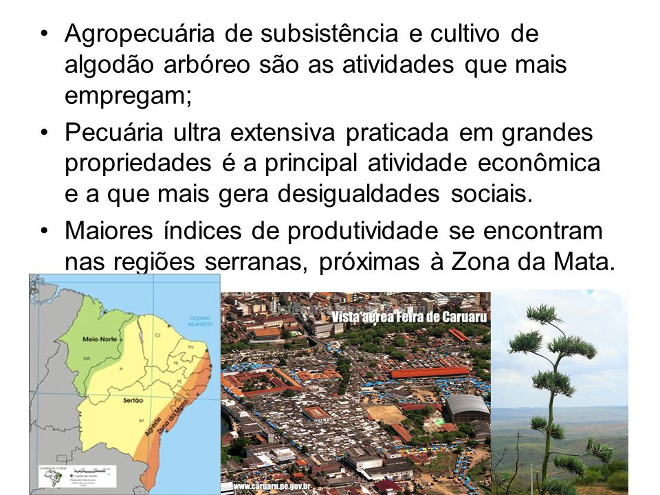 Agropecuária de subsistência e cultivo de algodão arbóreo são as atividades que mais empregam;