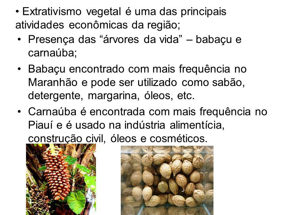 Extrativismo vegetal é uma das principais atividades econômicas da região;