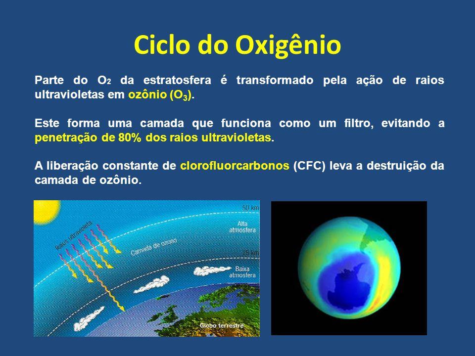 Ciclo do Oxigênio Parte do O2 da estratosfera é transformado pela ação de raios ultravioletas em ozônio (O3).