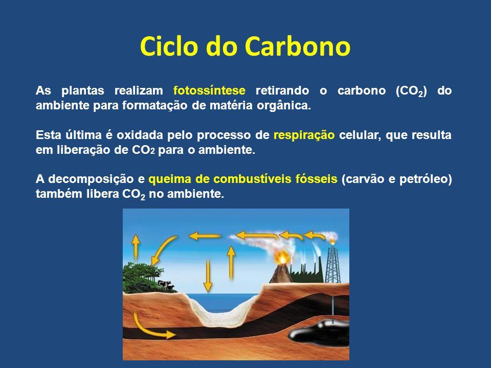 Ciclo do Carbono As plantas realizam fotossíntese retirando o carbono (CO2) do ambiente para formatação de matéria orgânica.