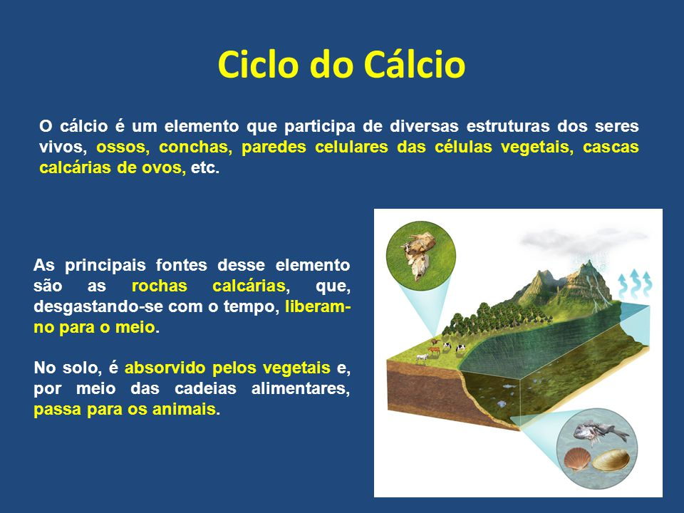 Ciclo do Cálcio