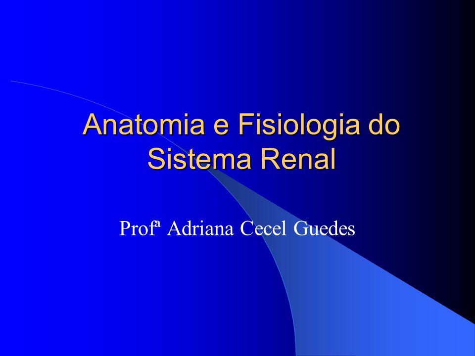 Excelente Anatomía Y Fisiología De Ppt Sistema Renal Bandera ...