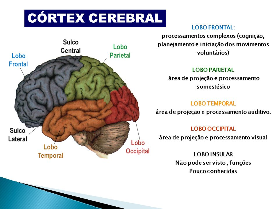 Moderno Reptil Anatomía Del Cerebro Inspiración - Anatomía de Las ...