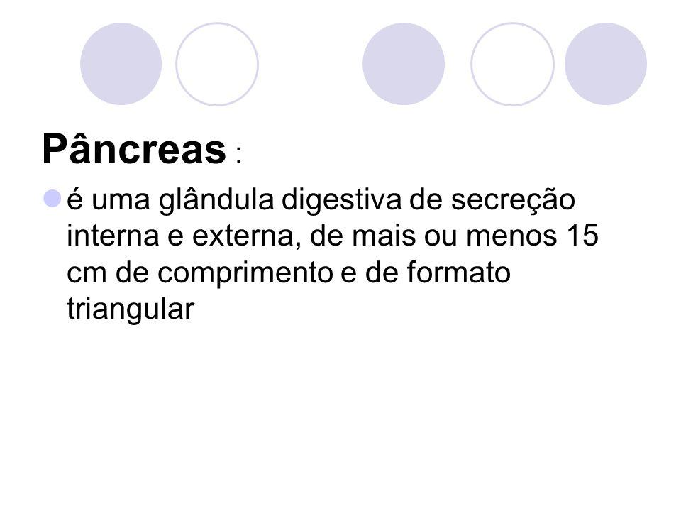 Pâncreas : é uma glândula digestiva de secreção interna e externa, de mais ou menos 15 cm de comprimento e de formato triangular.