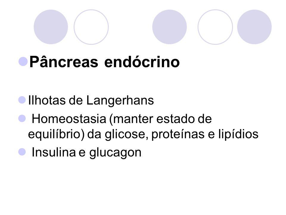 Pâncreas endócrino Ilhotas de Langerhans