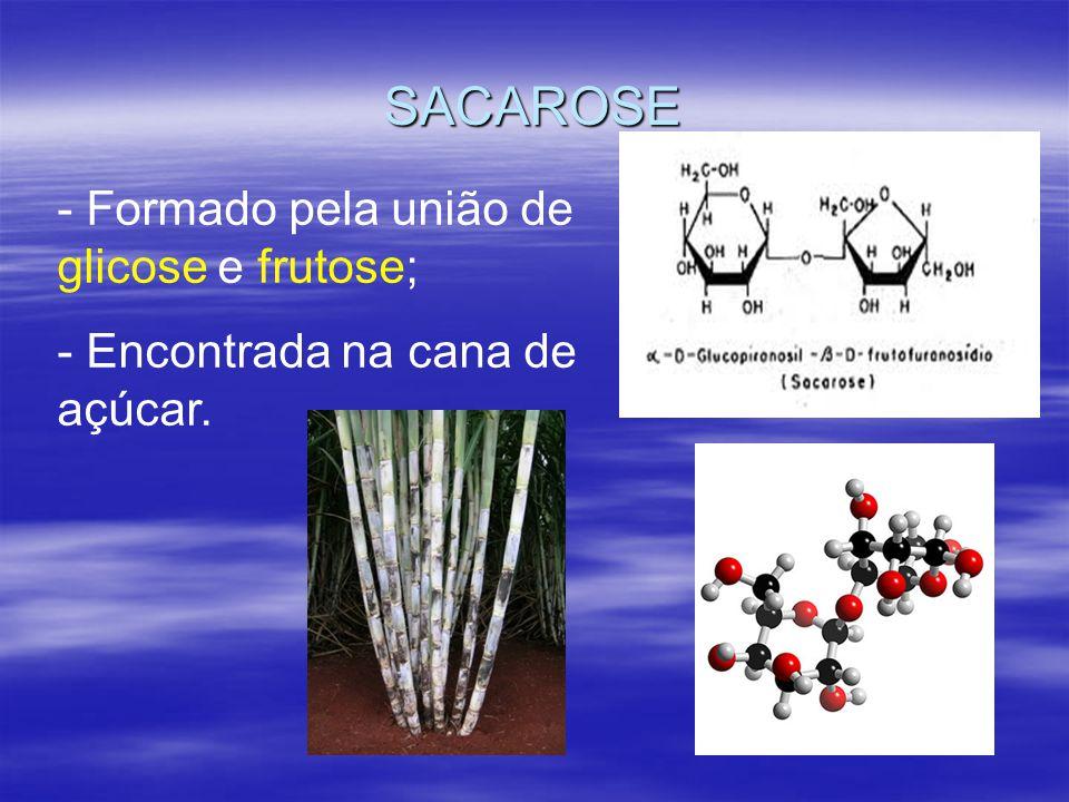 SACAROSE Formado pela união de glicose e frutose;
