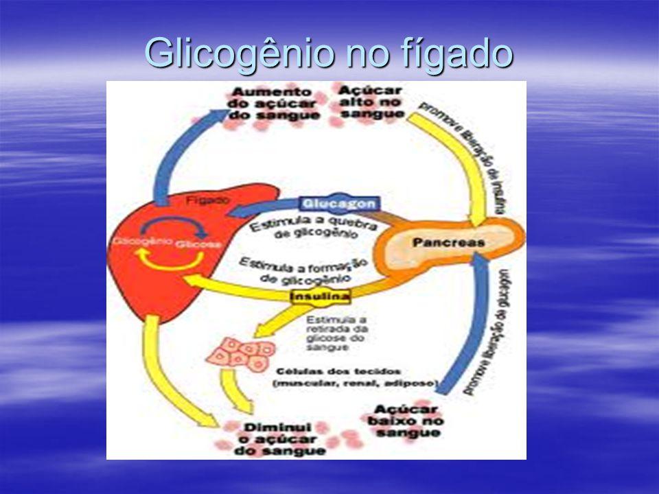 Glicogênio no fígado