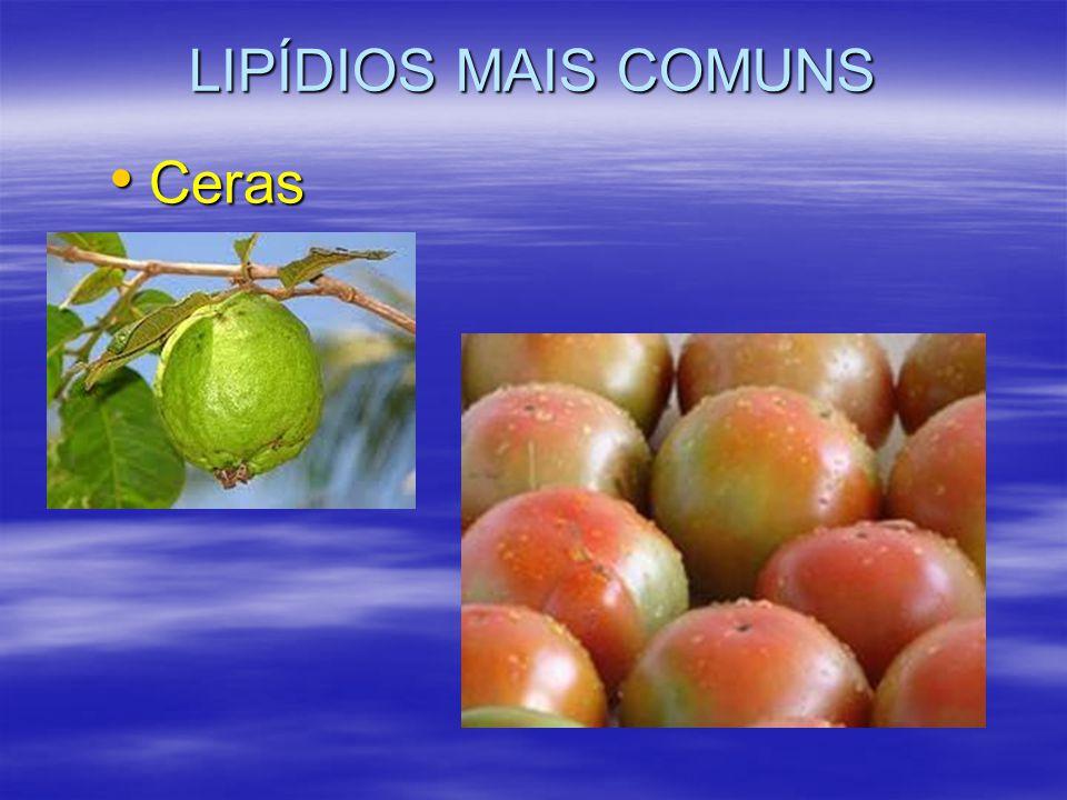 LIPÍDIOS MAIS COMUNS Ceras