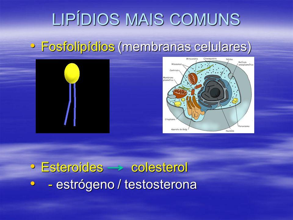 LIPÍDIOS MAIS COMUNS Fosfolipídios (membranas celulares)
