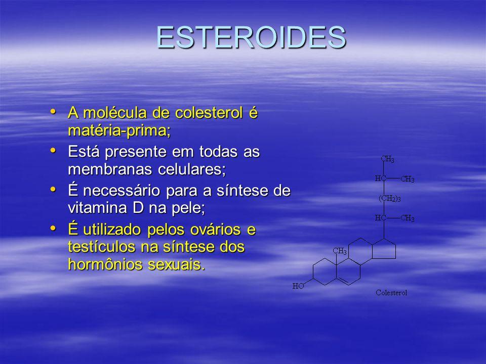 ESTEROIDES A molécula de colesterol é matéria-prima;