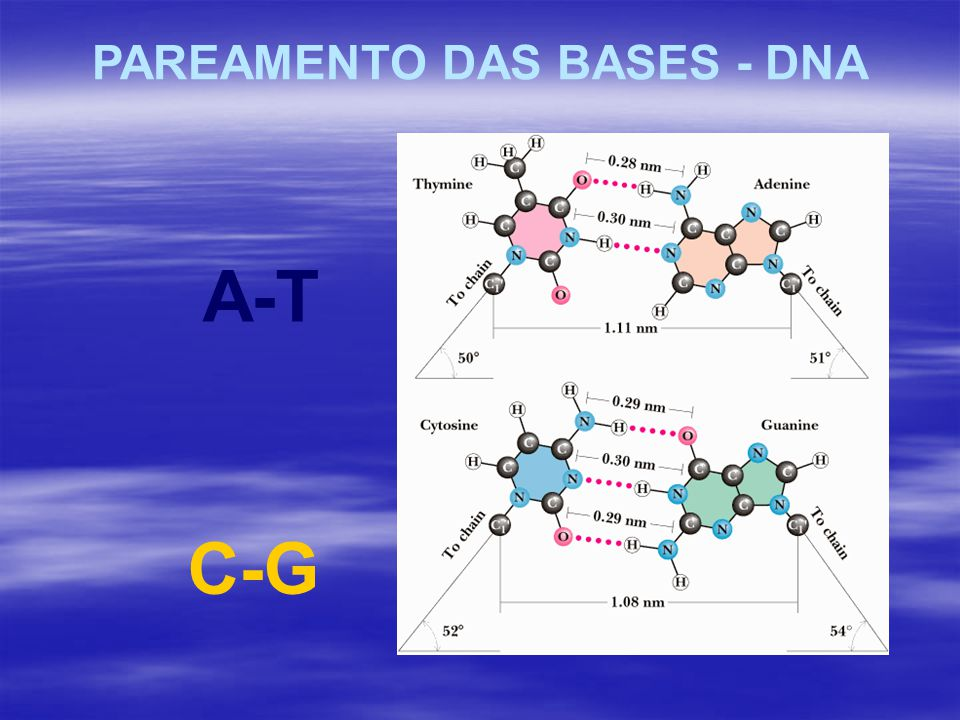 PAREAMENTO DAS BASES - DNA