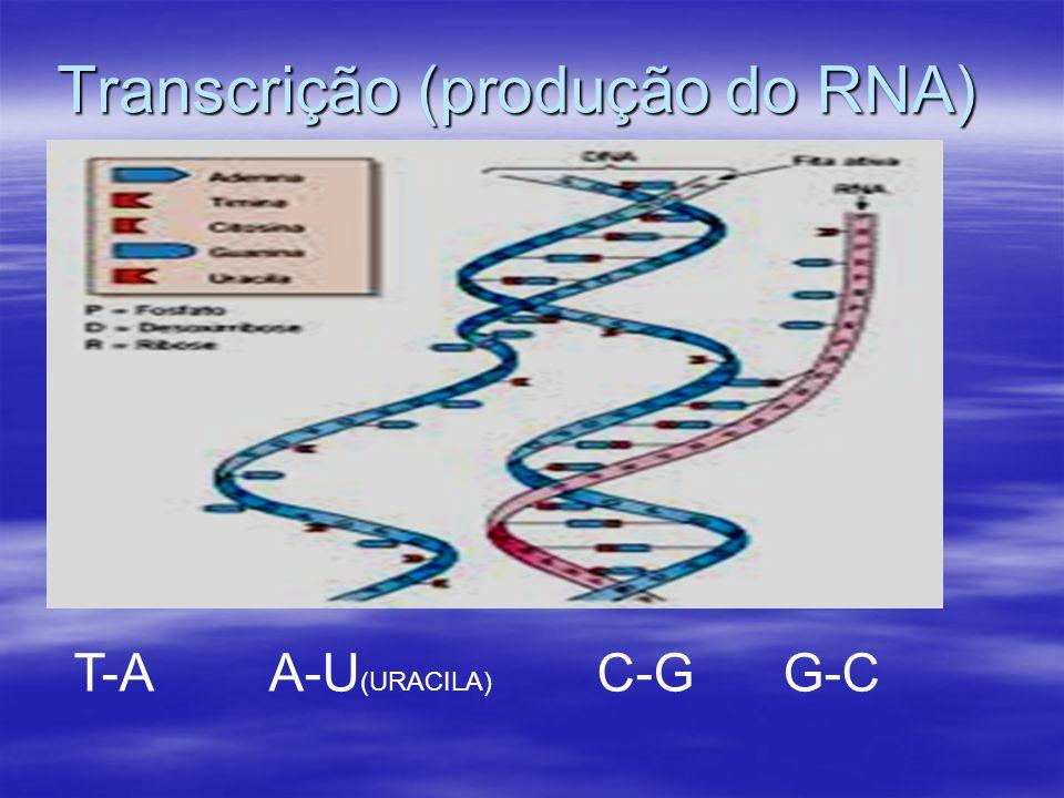 Transcrição (produção do RNA)