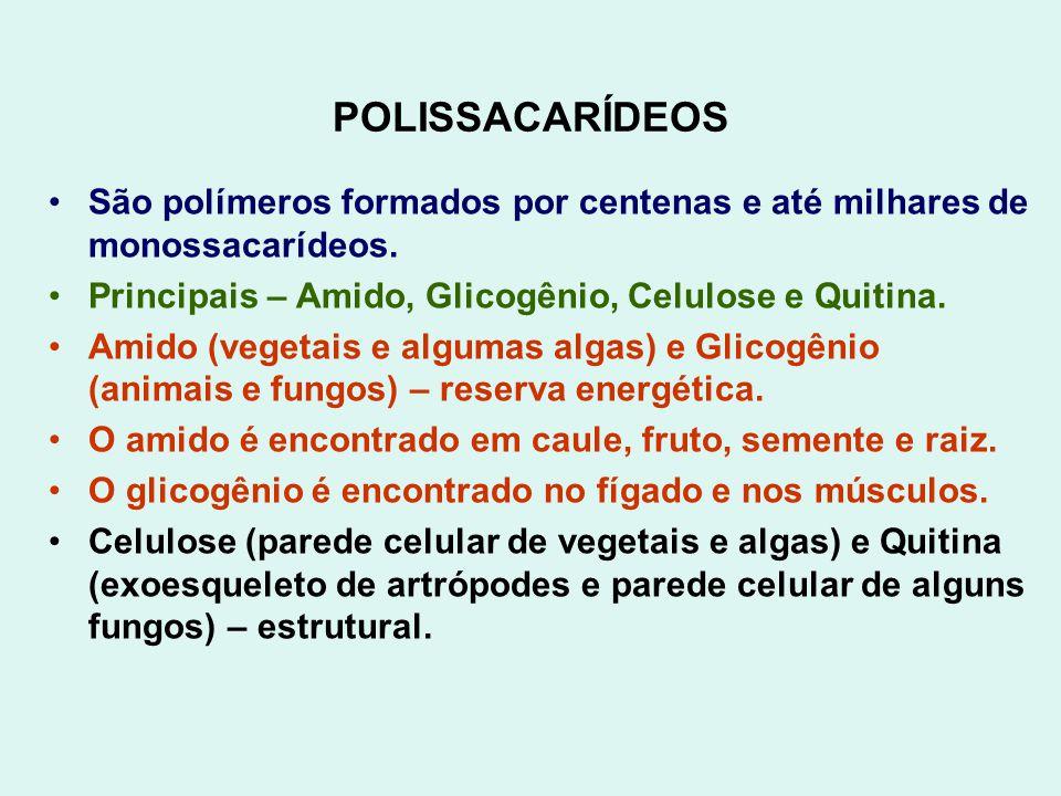 POLISSACARÍDEOS São polímeros formados por centenas e até milhares de monossacarídeos. Principais – Amido, Glicogênio, Celulose e Quitina.