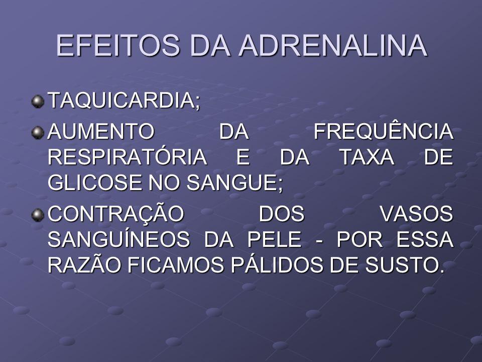 EFEITOS DA ADRENALINA TAQUICARDIA;