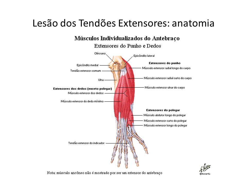 Moderno Anatomía Dedo Ideas - Anatomía de Las Imágenesdel Cuerpo ...