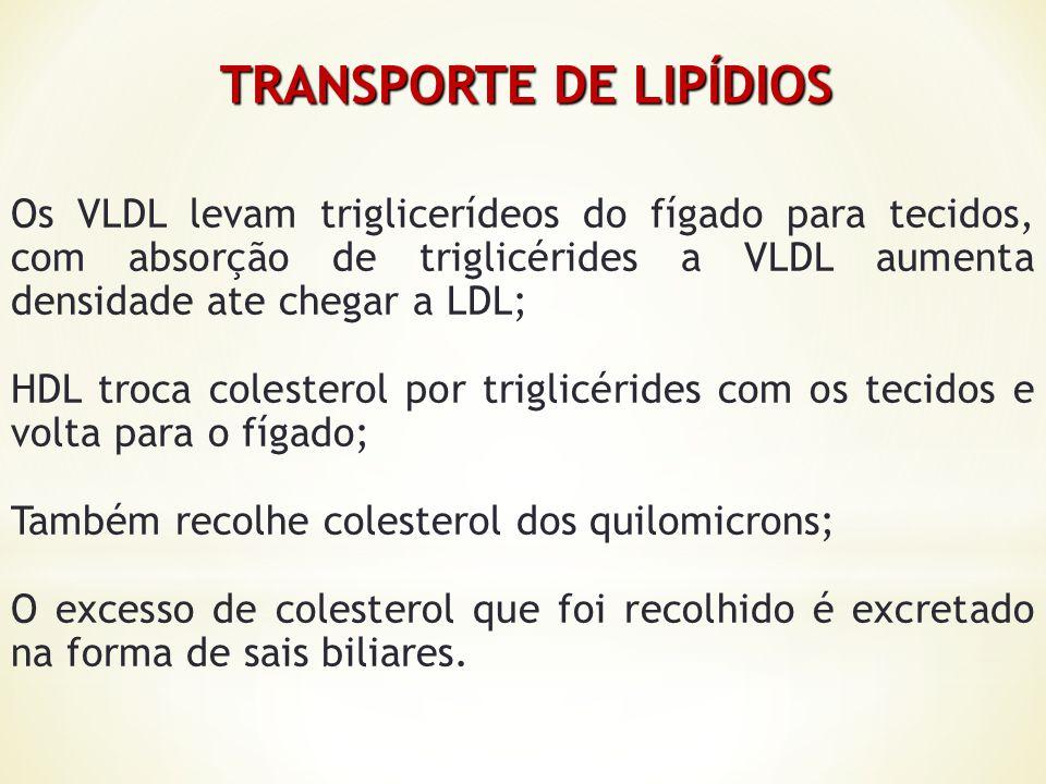TRANSPORTE DE LIPÍDIOS