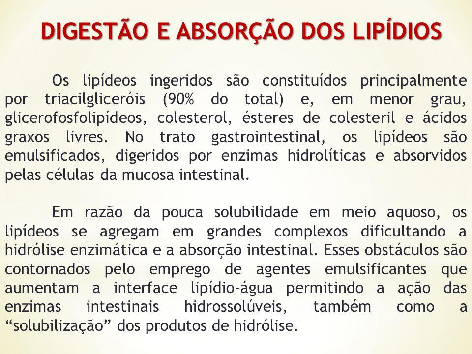 DIGESTÃO E ABSORÇÃO DOS LIPÍDIOS