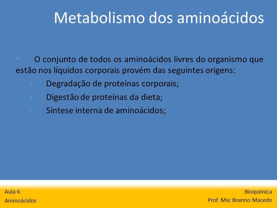 Metabolismo dos aminoácidos