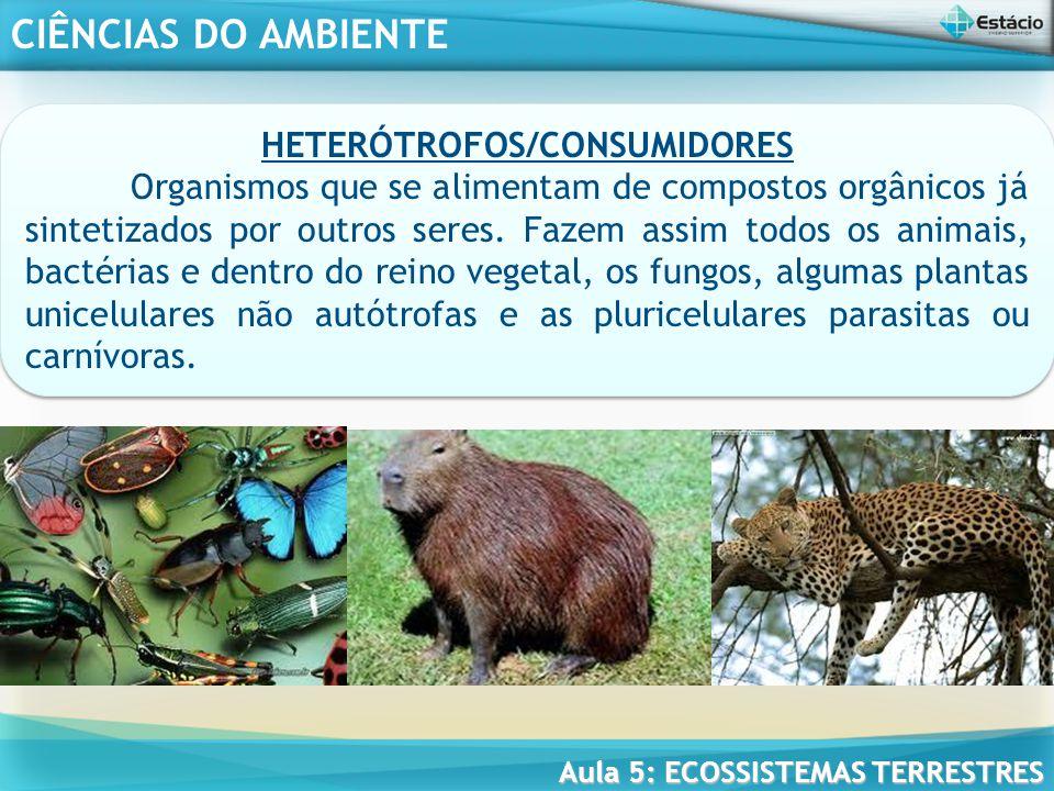 HETERÓTROFOS/CONSUMIDORES