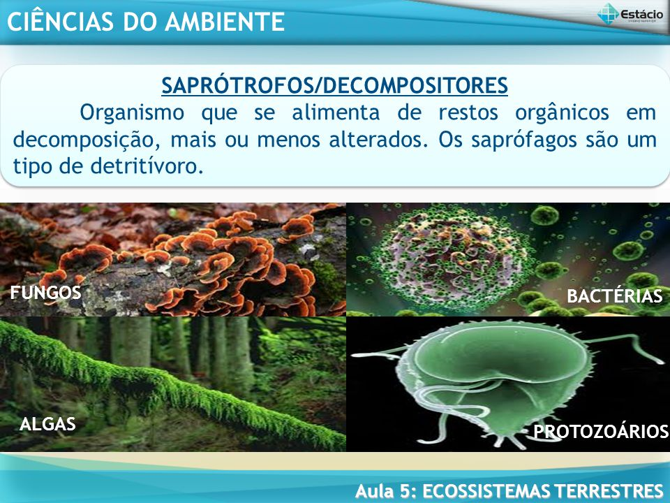 SAPRÓTROFOS/DECOMPOSITORES