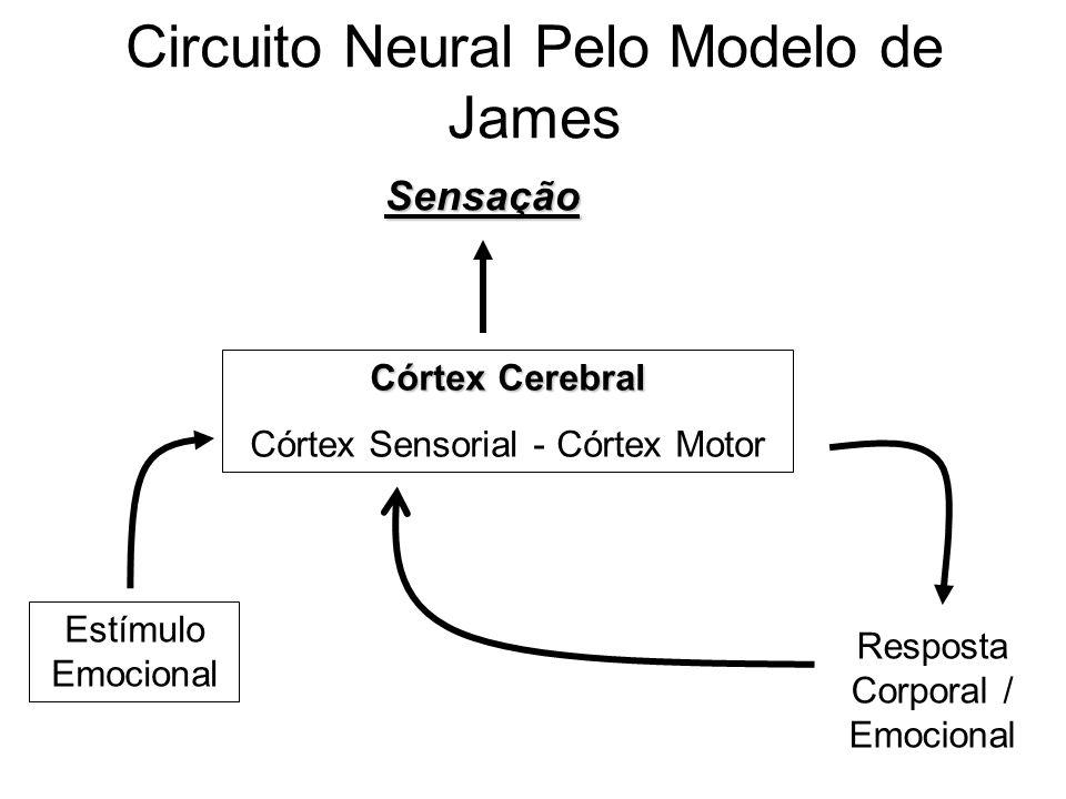 Circuito Neuronal : As teorias de emoções e seus circuitos ppt video online