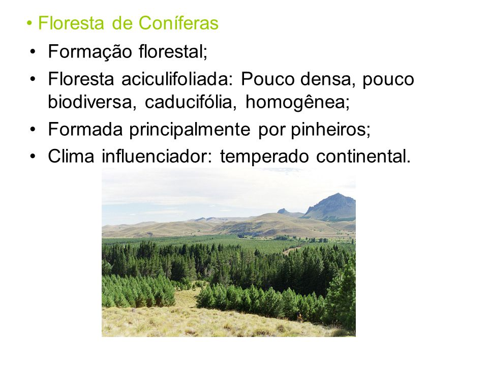Floresta de Coníferas Formação florestal; Floresta aciculifoliada: Pouco densa, pouco biodiversa, caducifólia, homogênea;