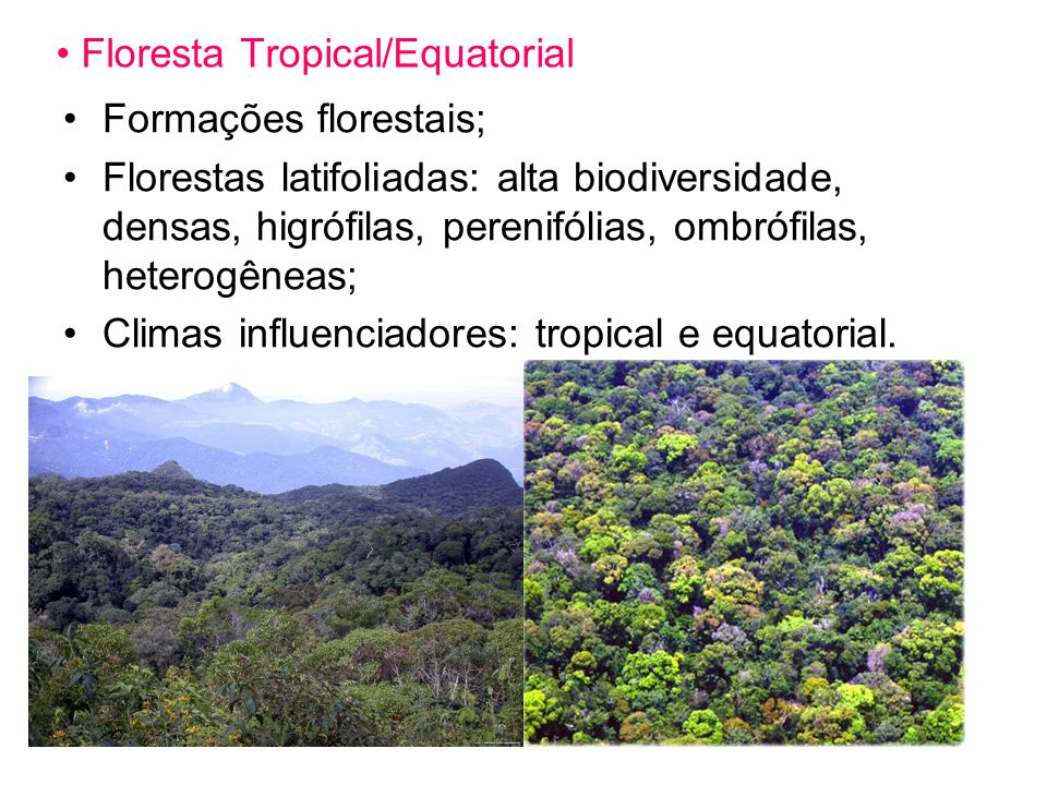 Floresta Tropical/Equatorial
