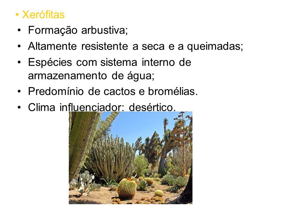 Xerófitas Formação arbustiva; Altamente resistente a seca e a queimadas; Espécies com sistema interno de armazenamento de água;