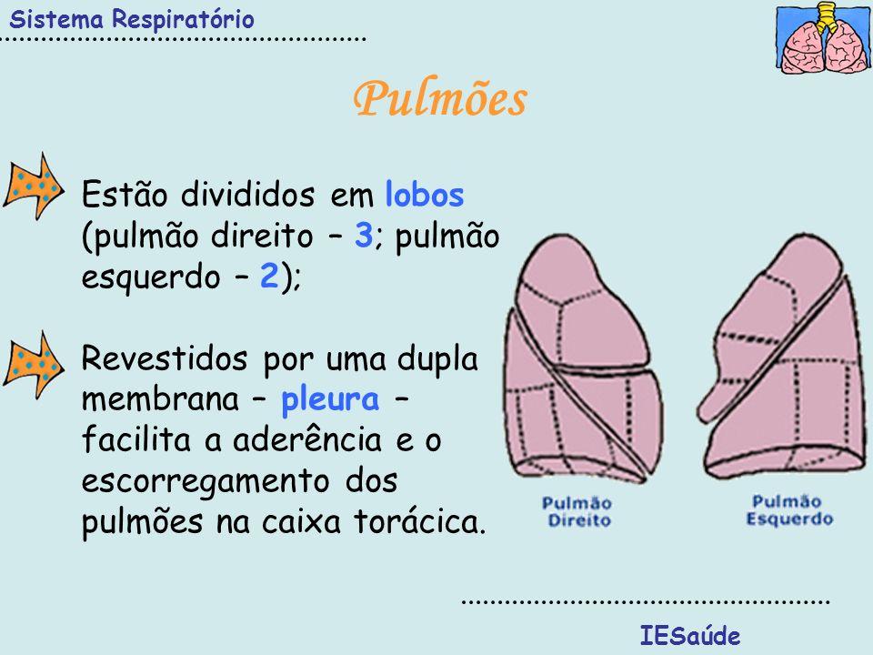 Sistema Respiratório Pulmões. Estão divididos em lobos (pulmão direito – 3; pulmão esquerdo – 2);