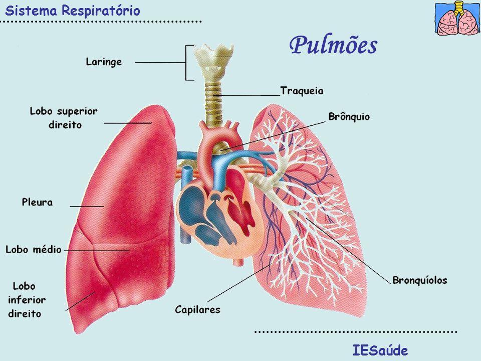 Sistema Respiratório Pulmões IESaúde