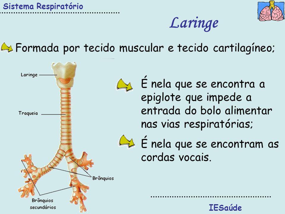 Laringe Formada por tecido muscular e tecido cartilagíneo;