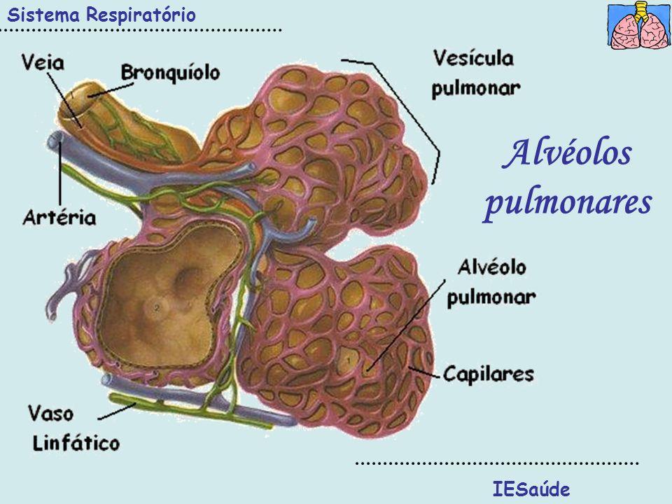 Sistema Respiratório Alvéolos pulmonares IESaúde