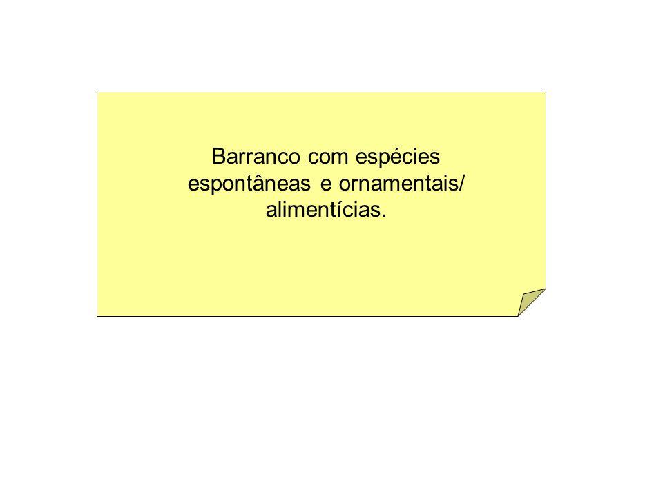 Barranco com espécies espontâneas e ornamentais/ alimentícias.