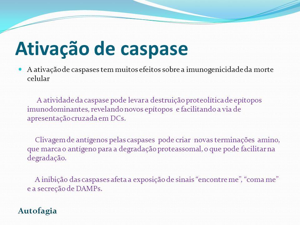 Ativação de caspase Autofagia