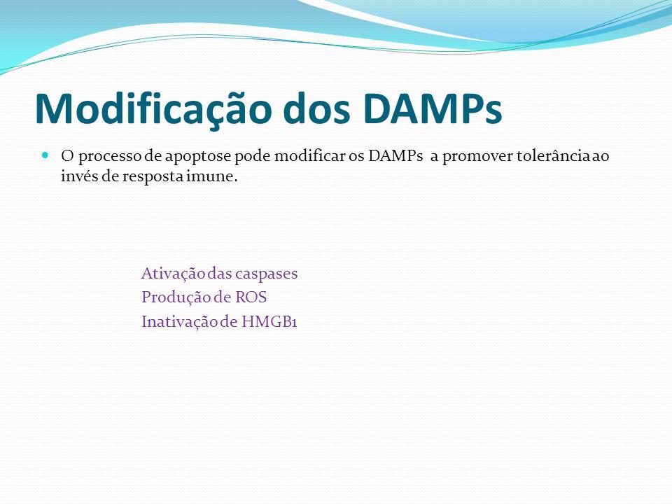 Modificação dos DAMPs O processo de apoptose pode modificar os DAMPs a promover tolerância ao invés de resposta imune.
