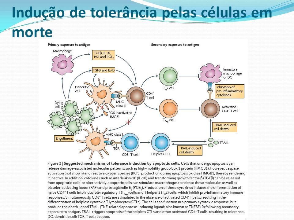Indução de tolerância pelas células em morte