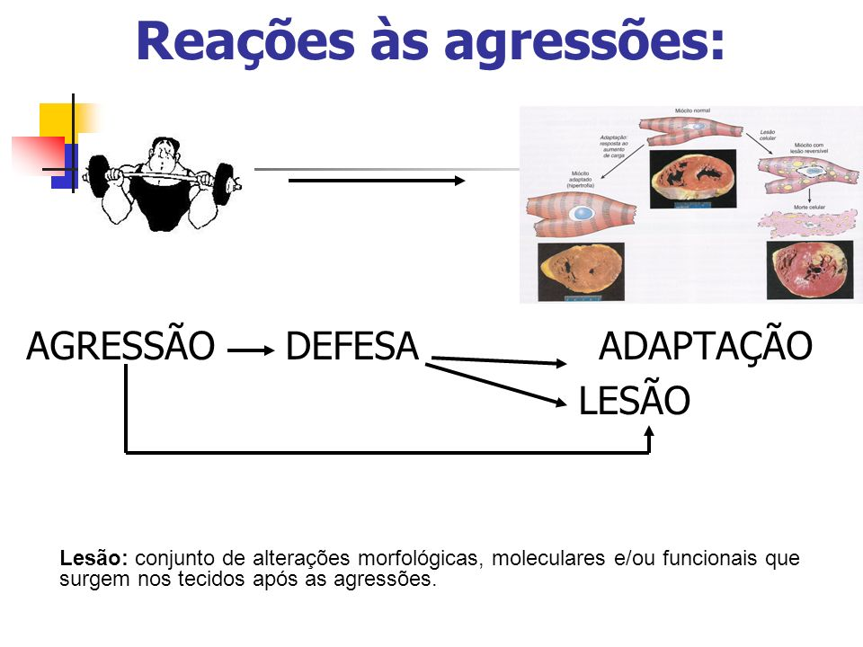 Reações às agressões: AGRESSÃO DEFESA ADAPTAÇÃO LESÃO
