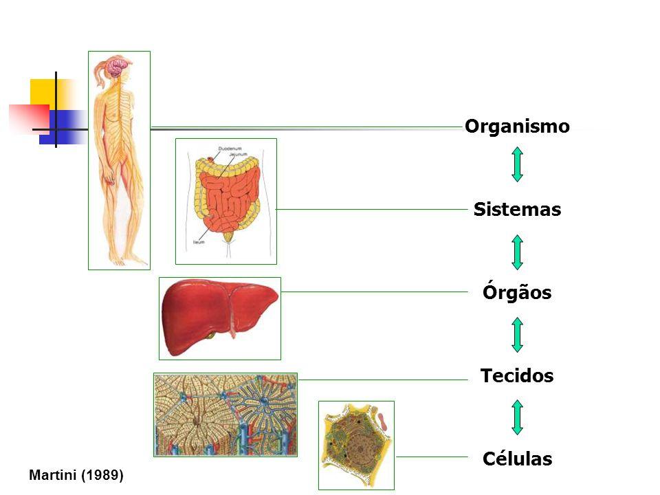 Organismo Sistemas Órgãos Tecidos Células