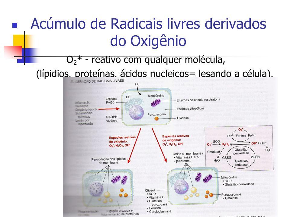 Acúmulo de Radicais livres derivados do Oxigênio