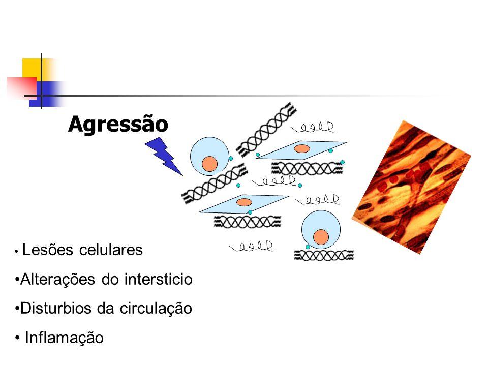 Agressão Alterações do intersticio Disturbios da circulação Inflamação