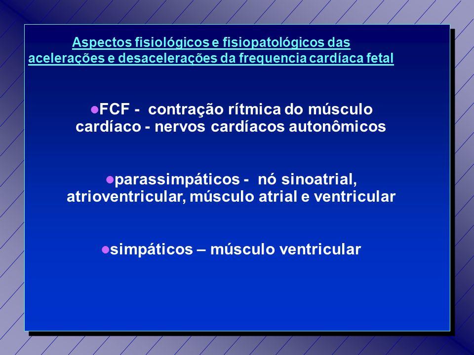 simpáticos – músculo ventricular