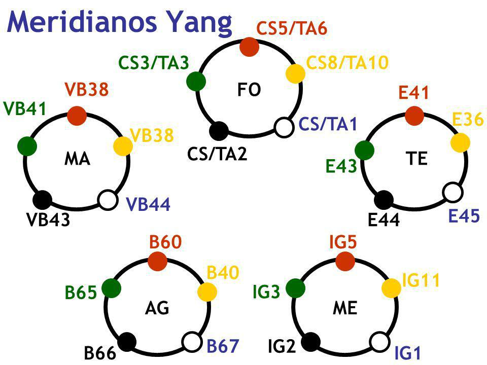 Meridianos Yang CS5/TA6 CS3/TA3 CS8/TA10 VB38 FO E41 VB41 E36 CS/TA1