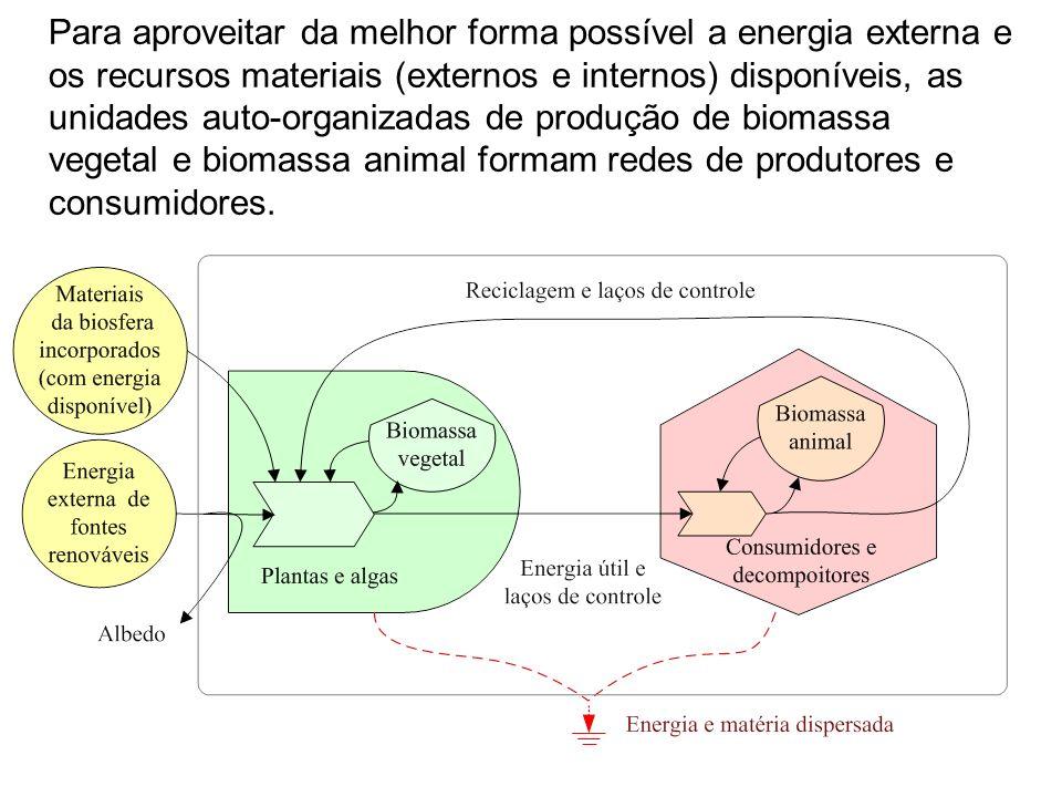 Para aproveitar da melhor forma possível a energia externa e os recursos materiais (externos e internos) disponíveis, as unidades auto-organizadas de produção de biomassa vegetal e biomassa animal formam redes de produtores e consumidores.