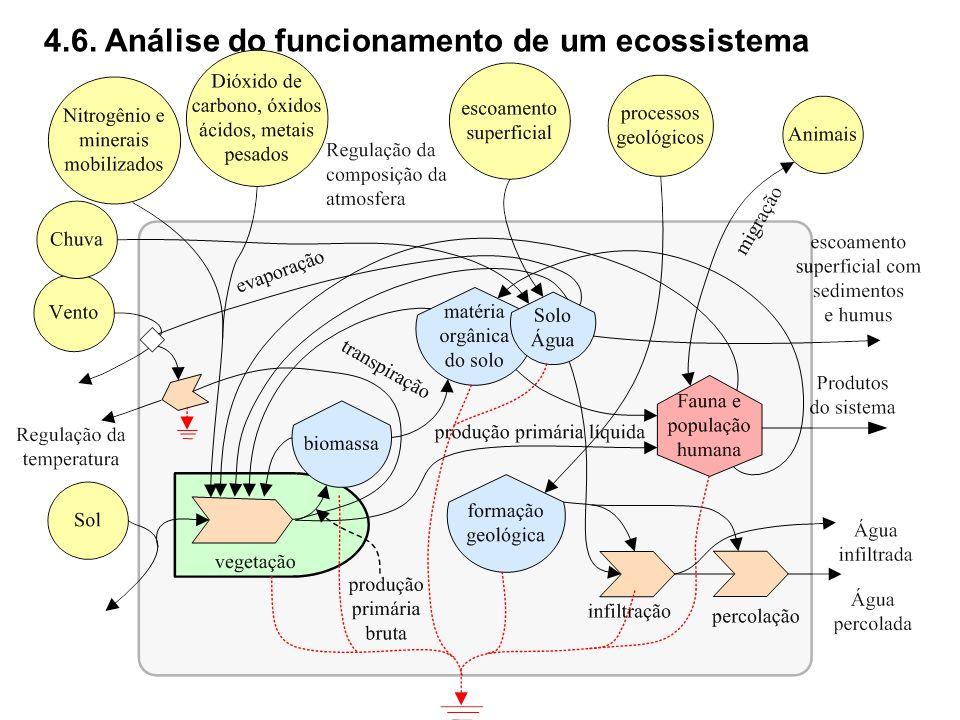 4.6. Análise do funcionamento de um ecossistema