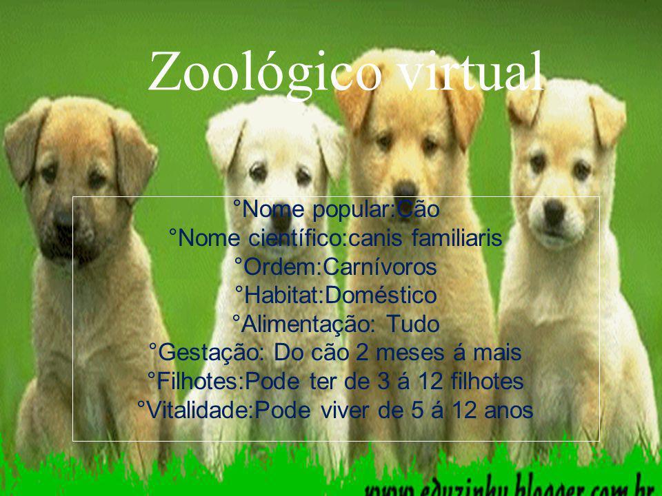 Zoológico virtual °Nome popular:Cão °Nome científico:canis familiaris