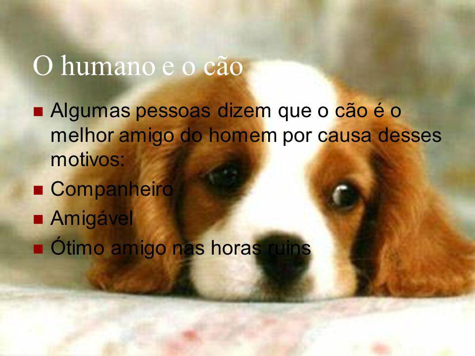 O humano e o cão Algumas pessoas dizem que o cão é o melhor amigo do homem por causa desses motivos: