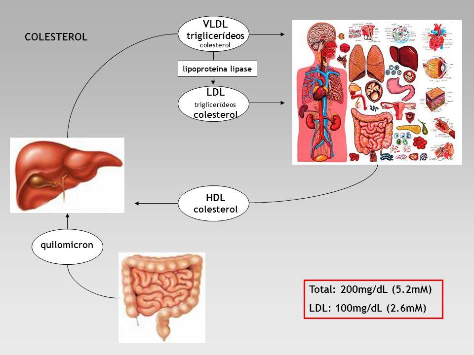 VLDL triglicerídeos colesterol LDL triglicerídeos colesterol